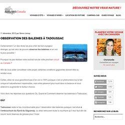 Observation des baleines à Tadoussac : Où ? Quand ? Comment ?