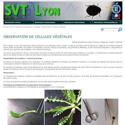 Observation de cellules végétales - SVT Lyon