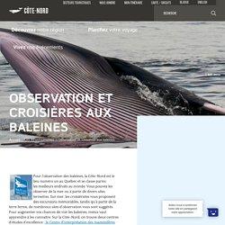 Observation et croisières aux baleines - Tourisme Côte-Nord