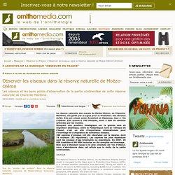 Observer les oiseaux dans la réserve naturelle de Moëze-Oléron