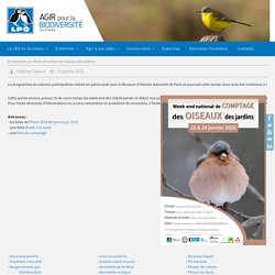 En Occitanie, en 2020, on compte les oiseaux des jardins! - LPO Occitanie