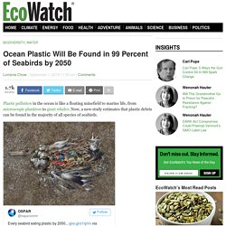 Ocean Plastic Will Be Found in 99 Percent of Seabirds by 2050