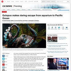 Octopus makes daring escape from aquarium to Pacific Ocean - Trending