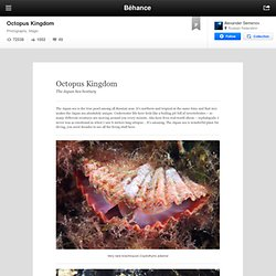 Octopus Kingdom on the Behance Network