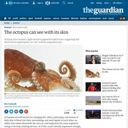 The octopus can see with its skin
