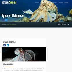 Types of Octopuses - Octopus Facts and Information