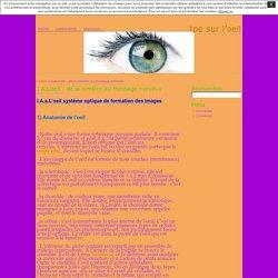 I.A.L'oeil : de la lumière au message nerveux