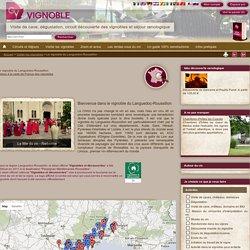 Oenotourisme : dégustations au domaine, chambres d'hôtes, gîtes et séjours de tourisme viticole dans le vignoble du Languedoc-Roussillon