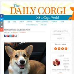It's Official! Welcome Back, My Corgi People! - The Daily Corgi