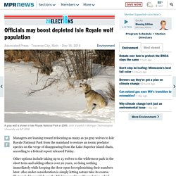 Officials may boost depleted Isle Royale wolf population
