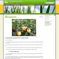 Le site officiel du Dr. Med Faouzi Kasraoui - Le Citronnier