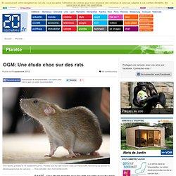 Toxicité «alarmante» pour des rats nourris avec un maïs OGM