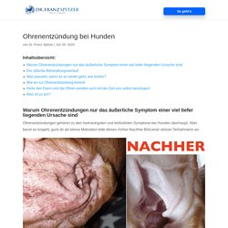 Ohrenentzündung bei Hunden