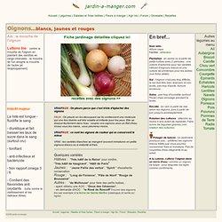 Oignons : cultiver les oignons, semer et récolter au jardin potager