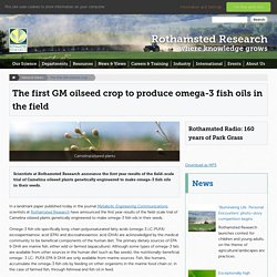 ROTHAMSTED_AC_UK 07/07/15 The first GM oilseed crop to produce omega-3 fish oils in the field
