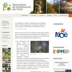 Le rôle des oiseaux dans l'écosystème forestier
