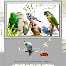- Les Oiseaux Exotiques (bec droit ou crochu ) Forum d'entraide