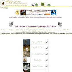 Chants et cris des oiseaux de france, chant, cri, melodie, sons, printemps, mesange, merle, jardins, sur web-ornitho, shouting and singing of birds