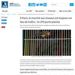 LPO 19/06/18 À Paris, le marché aux oiseaux est toujours un lieu de trafics : la LPO porte plainte