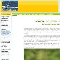 Etymologie - Grosbec casse-noyaux- Huppe fasciée- Grand tétras- Pies-grièches-