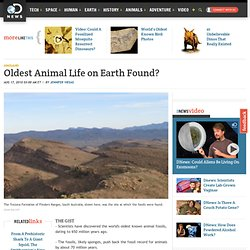 Oldest Animal Life on Earth Found?