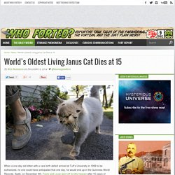 World's Oldest Living Janus Cat Dies at 15