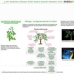 Moringa: tous sur l'arbre Moringa Oleifera. Usages, études, avertissements