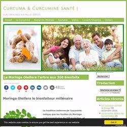 Le Moringa Oleifera l'arbre aux 300 bienfaits - Curcumine & Curcuma SantéCurcumine & Curcuma Santé