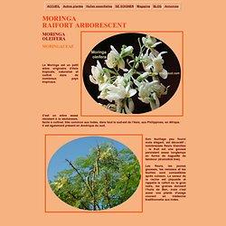 Moringa oleifera, le moringa, plante medicinale et dietetique .