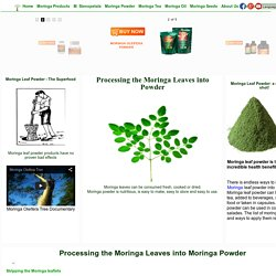 Moringa Oleifera: All About Moringa Tree. Products, uses, warnings, benefits