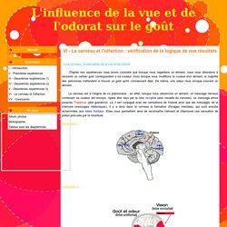 VI - Le cerveau et l'olfaction : vérification de la logique de nos résultats