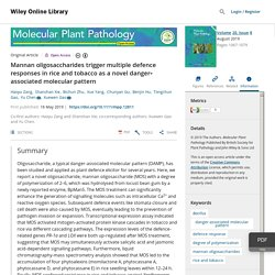 Mannan oligosaccharides trigger multiple defence responses in rice and tobacco as a novel danger‐associated molecular pattern - Zang - 2019 - Molecular Plant Pathology