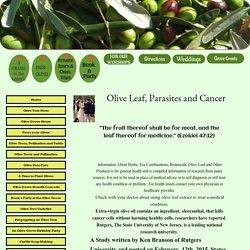 Olive Leaf Parasites and Cancer