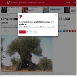 Oliveira mais antiga de Portugal nasceu há 3350 anos