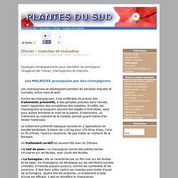 PLANTES DU SUD 10/04/06 Olivier : insectes et maladies