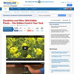 Get Omega-3s and Other Nutrients from Wild Edible Plants