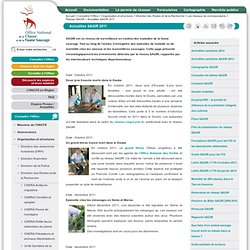 ONCFS - NOV 2011 - Intoxication de perdrix grises par les semences de blé traitées à l'imidaclopride.
