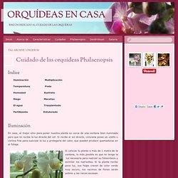 Orquídeas en casa