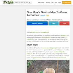 One Man's Genius Idea To Grow Tomatoes