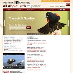 Your online guide to birds and bird watching, All About Birds, Cornell Lab of Ornithology