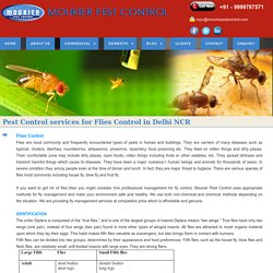 Online pest control for get rid of flies