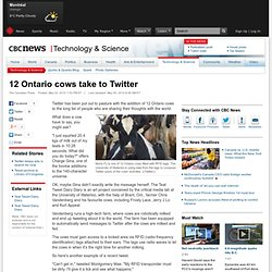 News - Technology & Science - 12 Ontario cows take to Twitter