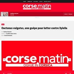 CORSE MATIN 12/07/20 Ooctonus vulgatus, une guêpe pour lutter contre Xylella