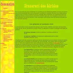 Opéra Savon: Transport des Graisses