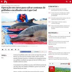 Operação em curso para salvar centenas de golfinhos encalhados em Cape Cod