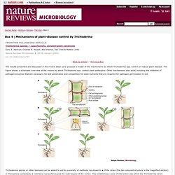 Box 4 : Trichoderma species [mdash] opportunistic, avirulent plant symbionts : Nature Reviews Microbiology