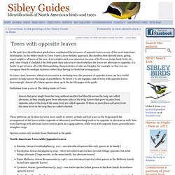 Trees with opposite leaves « Sibley Guides