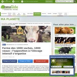 L'élevage intensif, majoritaire en France