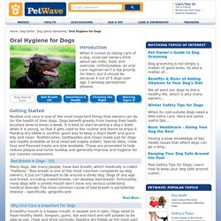 Information on Oral Care for Dogs