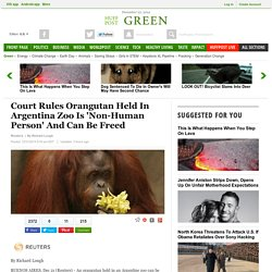 Court Rules Orangutan Held In Argentina Zoo Is 'Non-Human Person' And Can Be Freed
